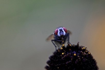 a fly staring into the camera