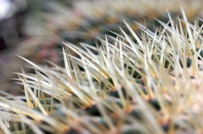 a very close look at a cactus